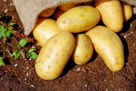 https://pixabay.com/pt/photos/batatas-produtos-hort%C3%ADcolas-1585075/