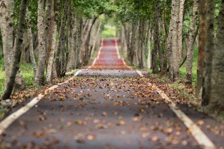 https://pixabay.com/pt/photos/bosque-estrada-folhas-caindo-656969/