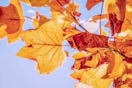 https://pixabay.com/pt/photos/outono-folhas-de-outono-folhas-3763897/
